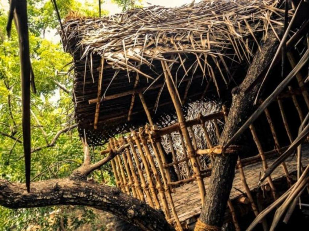 Tree Houses Hotels The Perfect Home Design