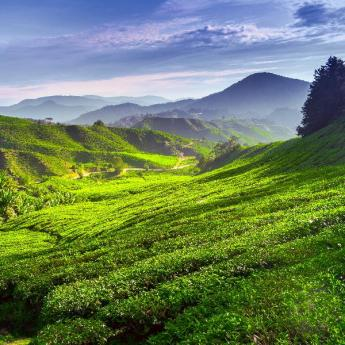 Cameron Highlands Hotels, 877 hotels