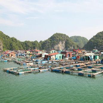 Quần Đảo Cát Bà khách sạn, 281 khách sạn