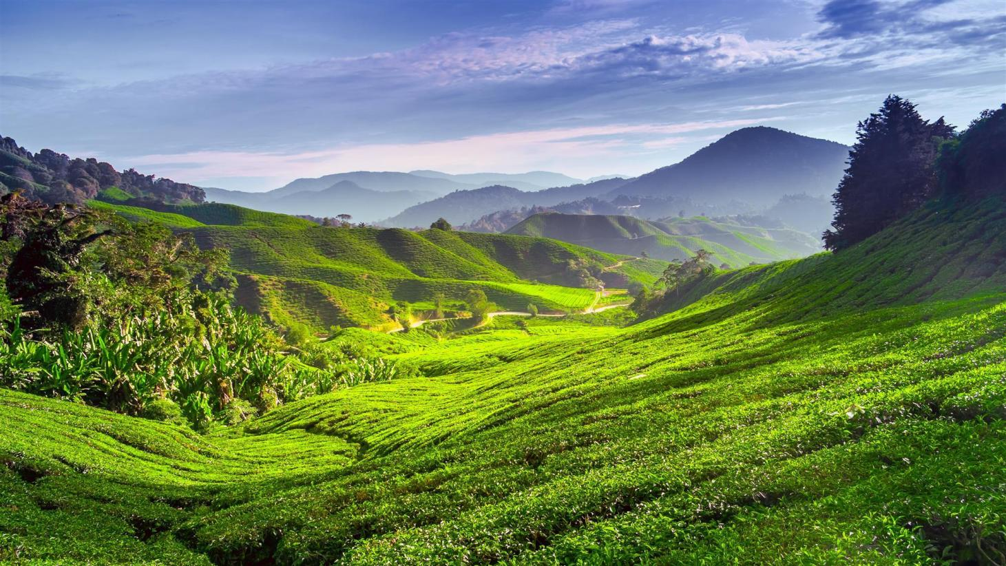 10 Best Cameron Highlands Hotels: HD Photos + Reviews of Hotels in