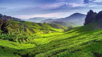 Cameron Highlands, Malezija