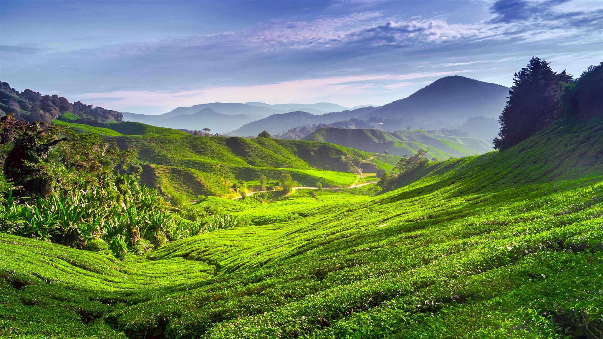 10 Best Cameron Highlands Hotels: HD Pictures + Reviews of