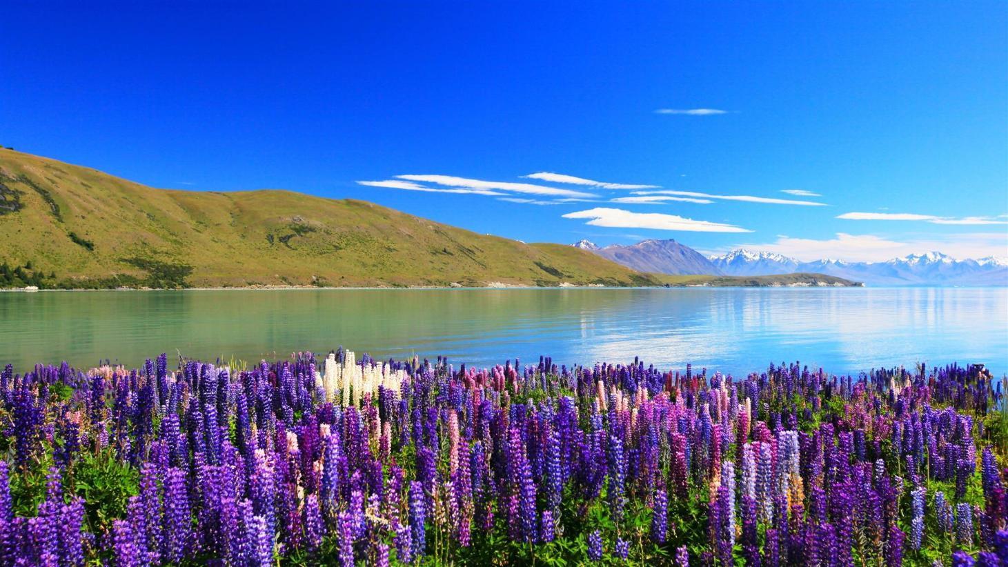Lake Tekapo Hostels - Best Price + HD Photos of Hostels in Lake Tekapo