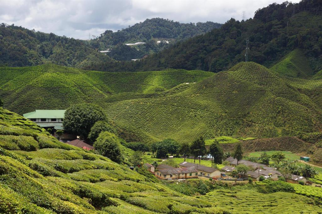 See all 16 photos Astana Holiday Apartment,  Cameron Highlands