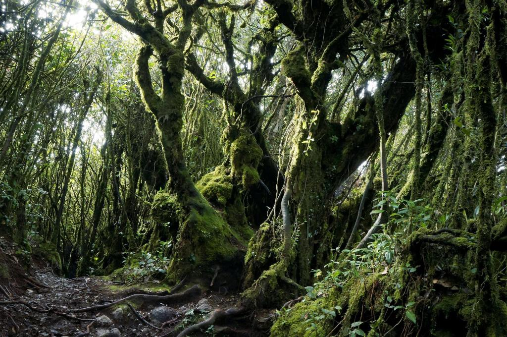 Mossy Forest - 6.19 km from property ATS Cameron Hotel