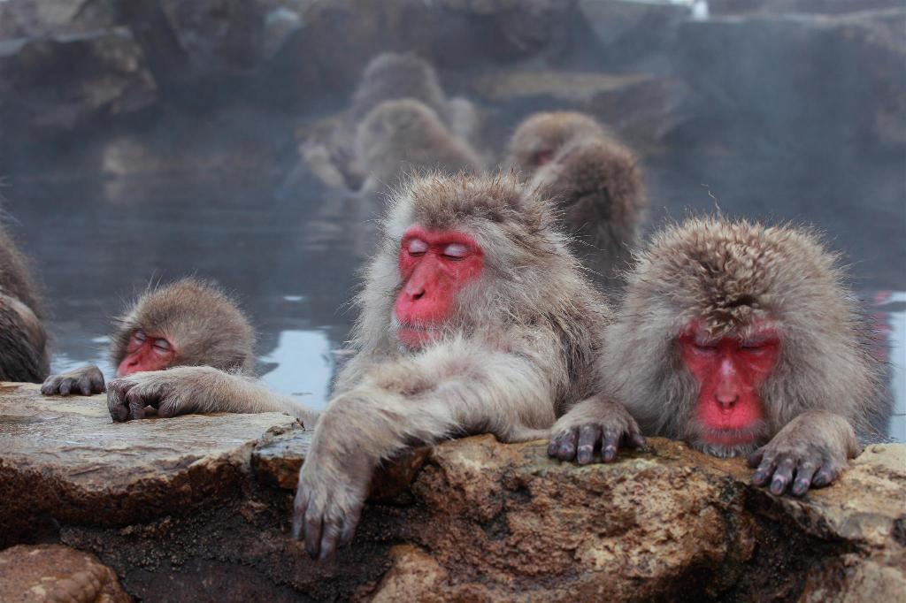 Jigokudani Yaen-Koen (The world of Snow Monkey) - 2.7 km from property