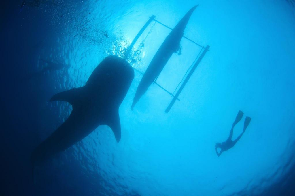 Oslob Whale Shark Watching - 8.58 km van de accommodatie Amazing Private House Crystal Clear Water