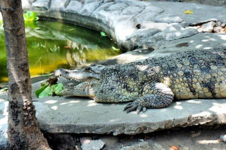 Crocodile Farm - 7.76 km from property Dhayne Bed and Breakfast