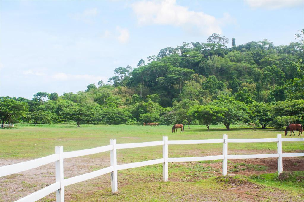 El Kabayo Riding Stables - 6.95 km from property APM POOL VILLA