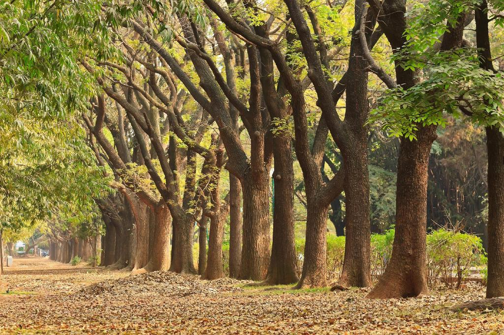 Cubbon Park - 6.74 km van de accommodatie Bridgebell pg dormitory for ladies