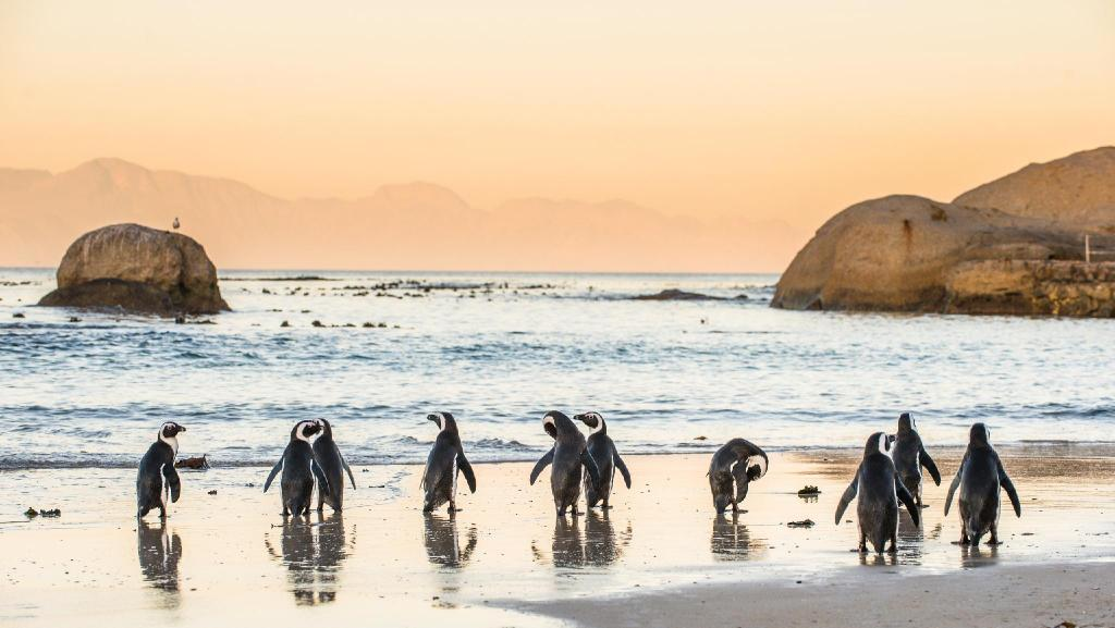 Boulders Beach - 1,46 km. fra ejendommen Roman Rock Apartments (Roman Rock and 3 on Rocklands Apartments)