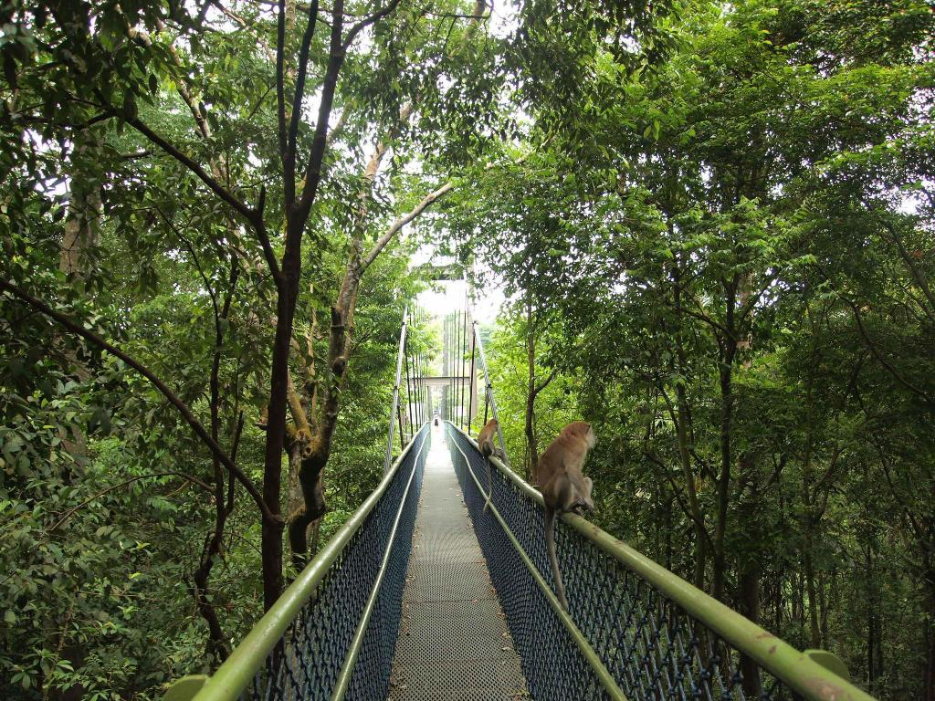 MacRitchie Reservoir - 6.13 km from property
