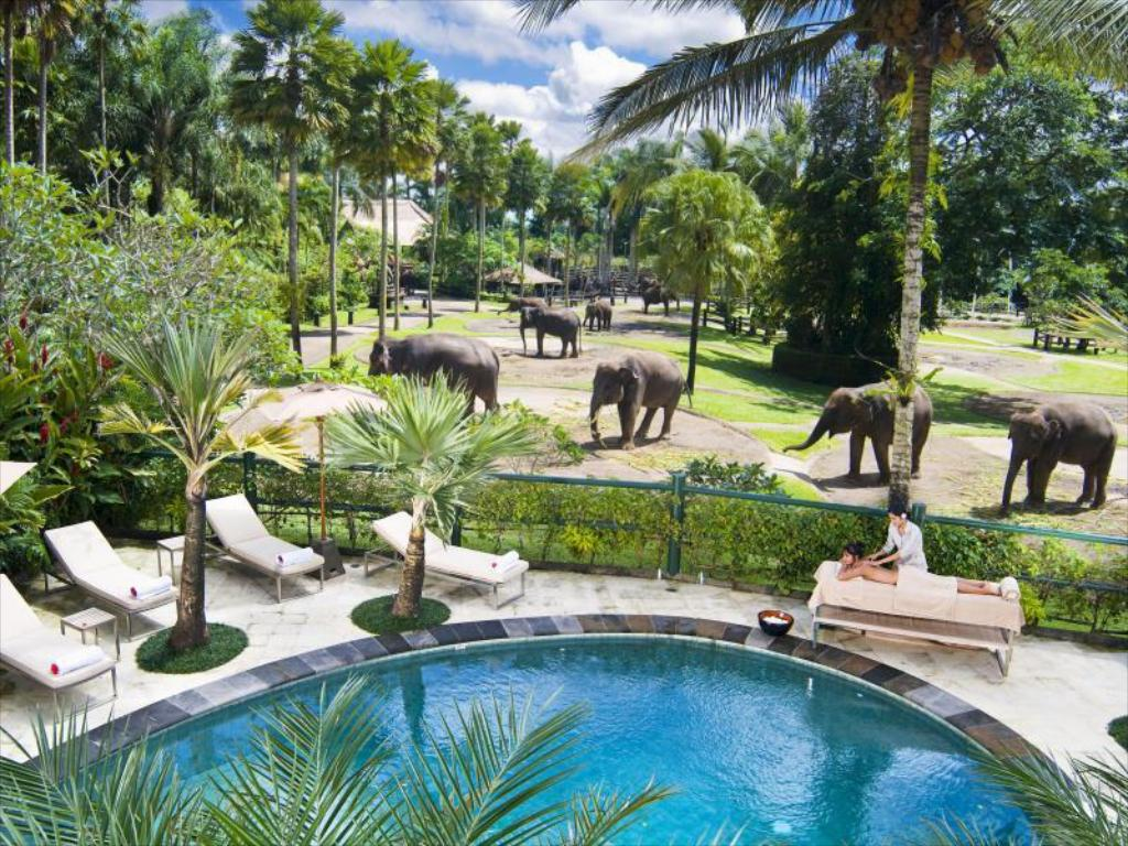Πισίνα Elephant Safari Park Lodge Hotel