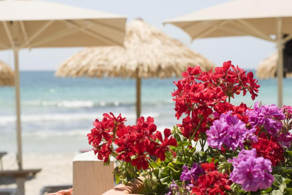 More about Conchiglia Azzurra Resort & Beach