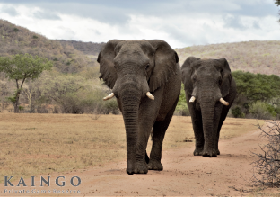Kaingo Private Game Reserve