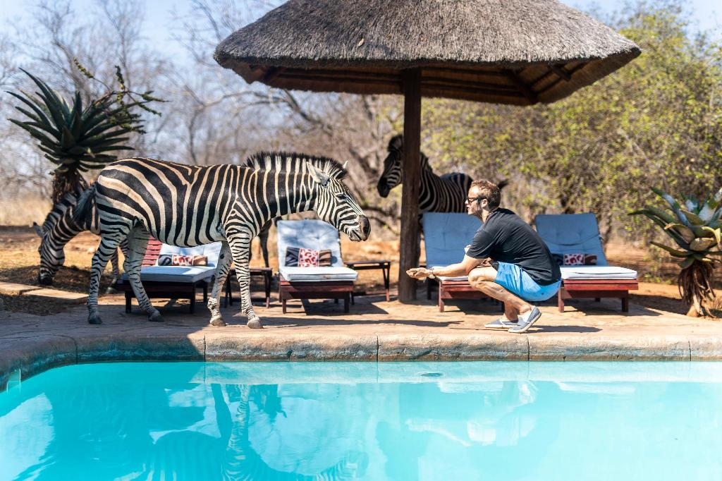 Swimming pool [outdoor] Royal Kruger Lodge