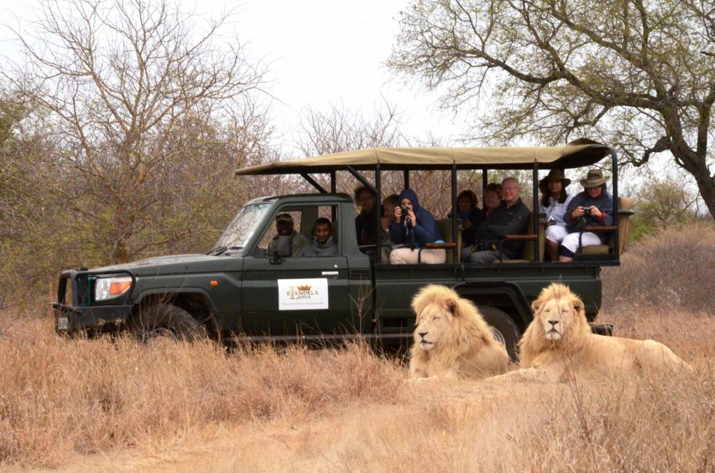 More about Elandela Private Game Reserve & Luxury Lodge