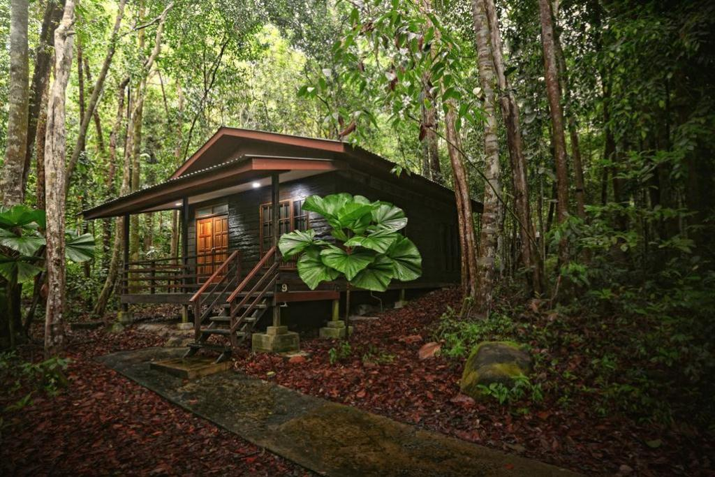 2-Bedroom Cabin for 6 People - Exterior view Permai Rainforest Resort