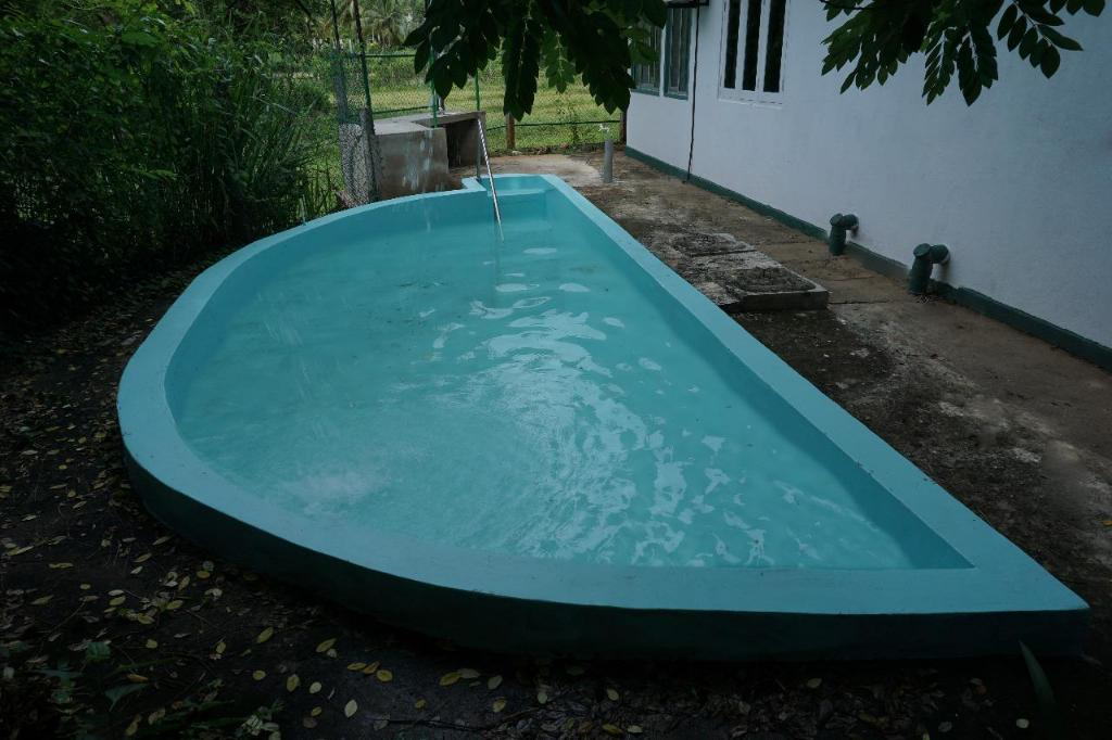 Swimming pool [outdoor] Paddy Field Bangalow