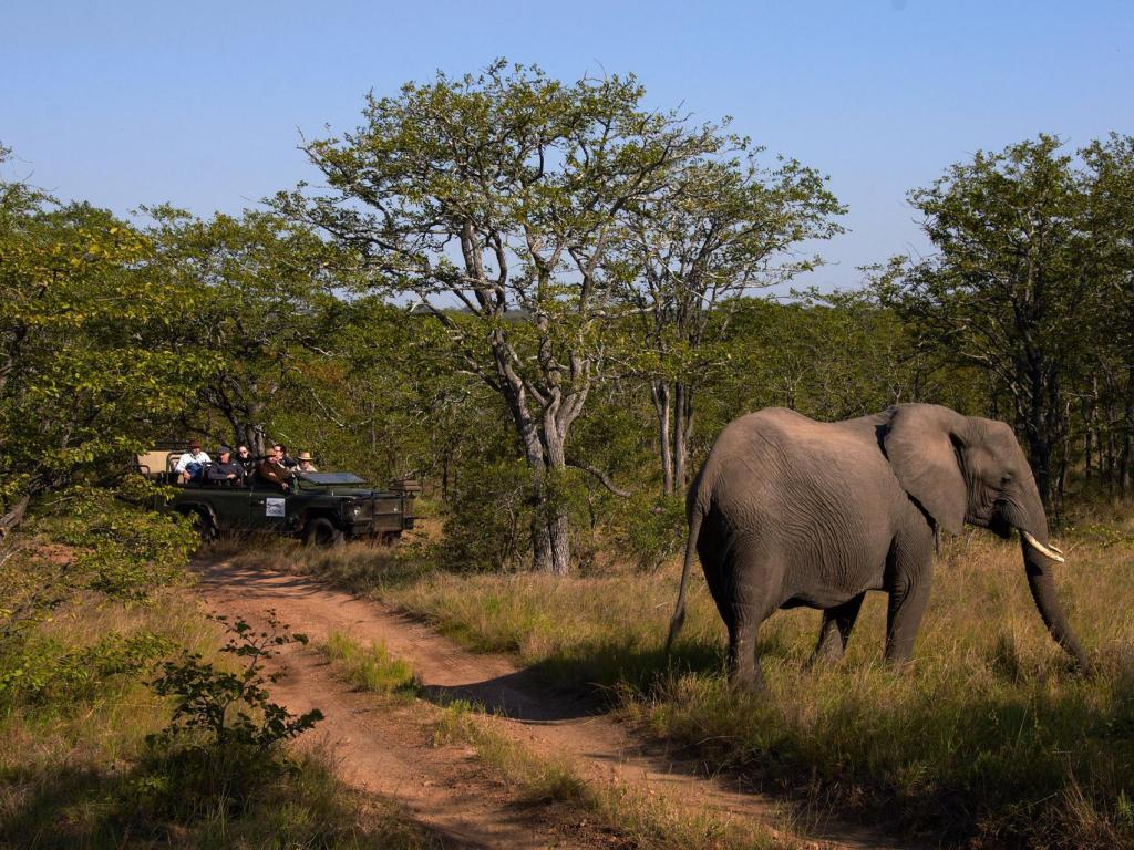Sports and activities Shindzela Tented Safari Camp and Walking Safaris Accommodation