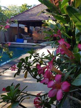 Swimming pool [outdoor] Gili Exotic Villas