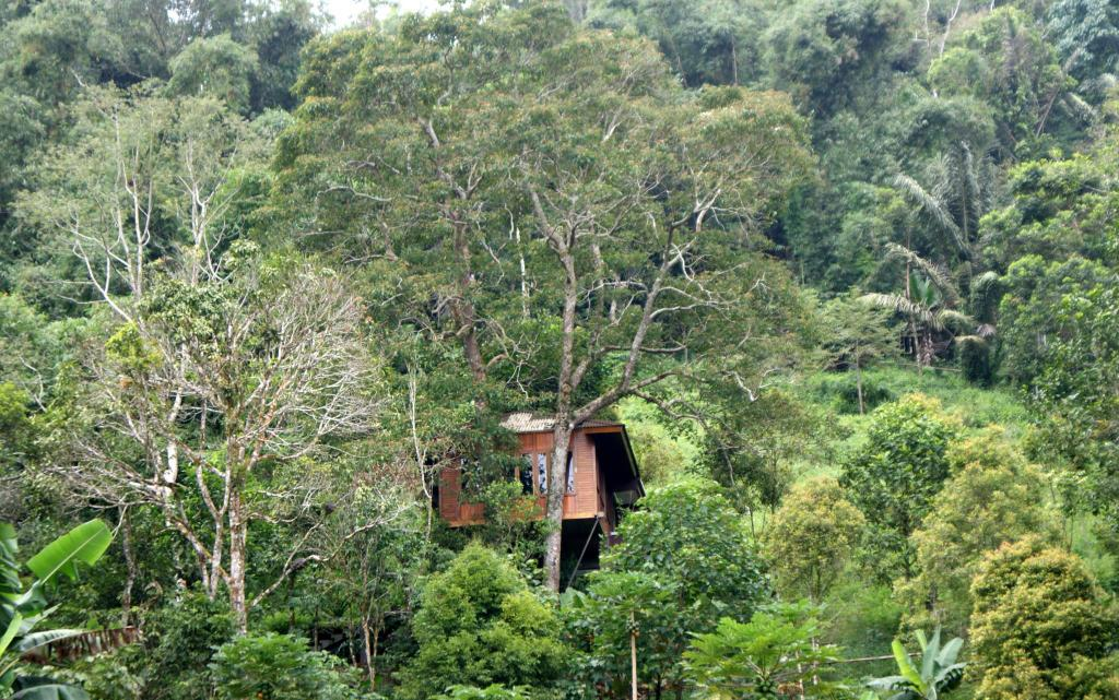 More about Candlenut Treehouse