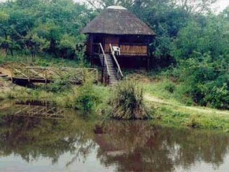 Pemandangan luar Marcs Treehouse Lodge