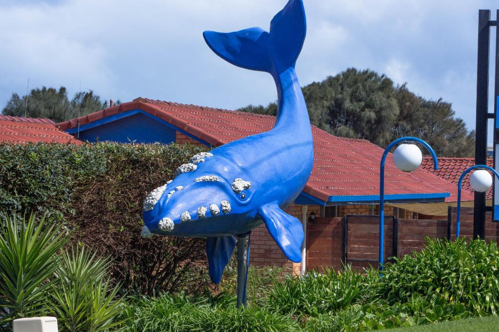 More about Blue Whale Motor Inn & Apartments