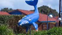 Blue Whale Motor Inn & Apartments