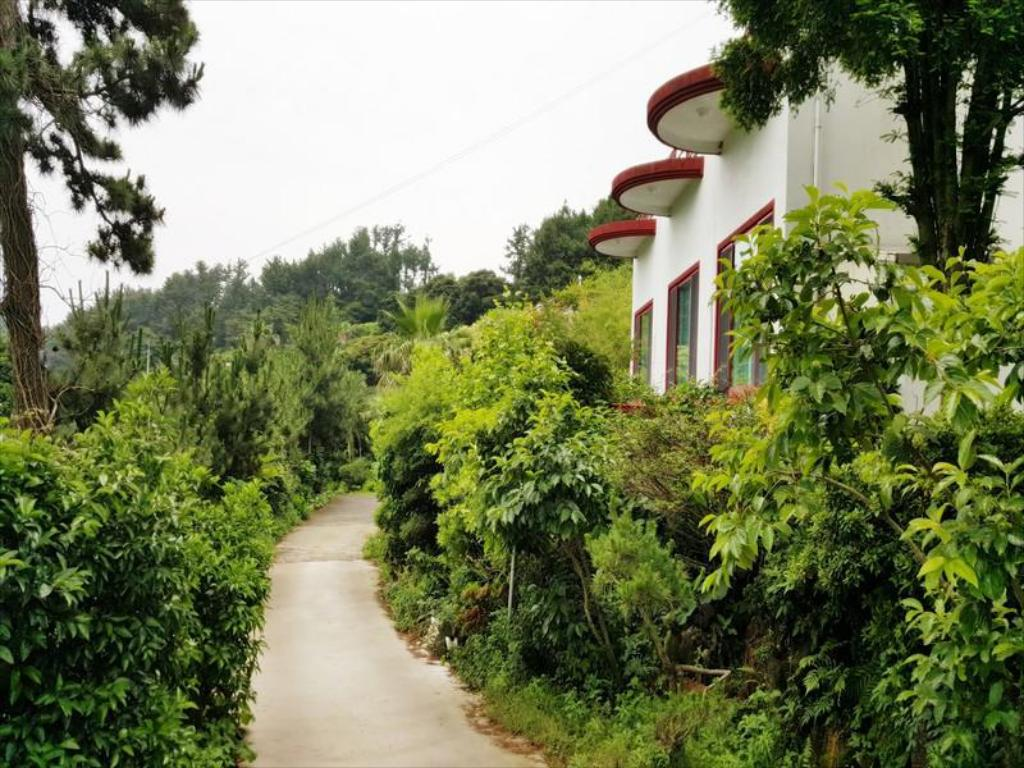 Exterior view Dreaming Forest Pension
