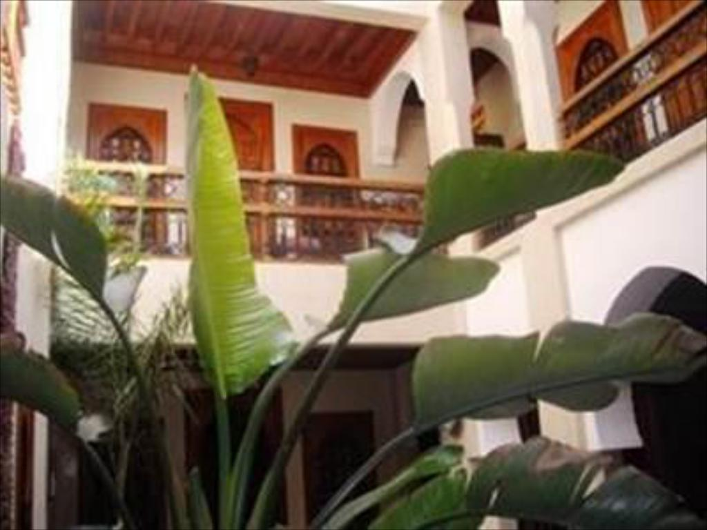 More about Riad Dubai