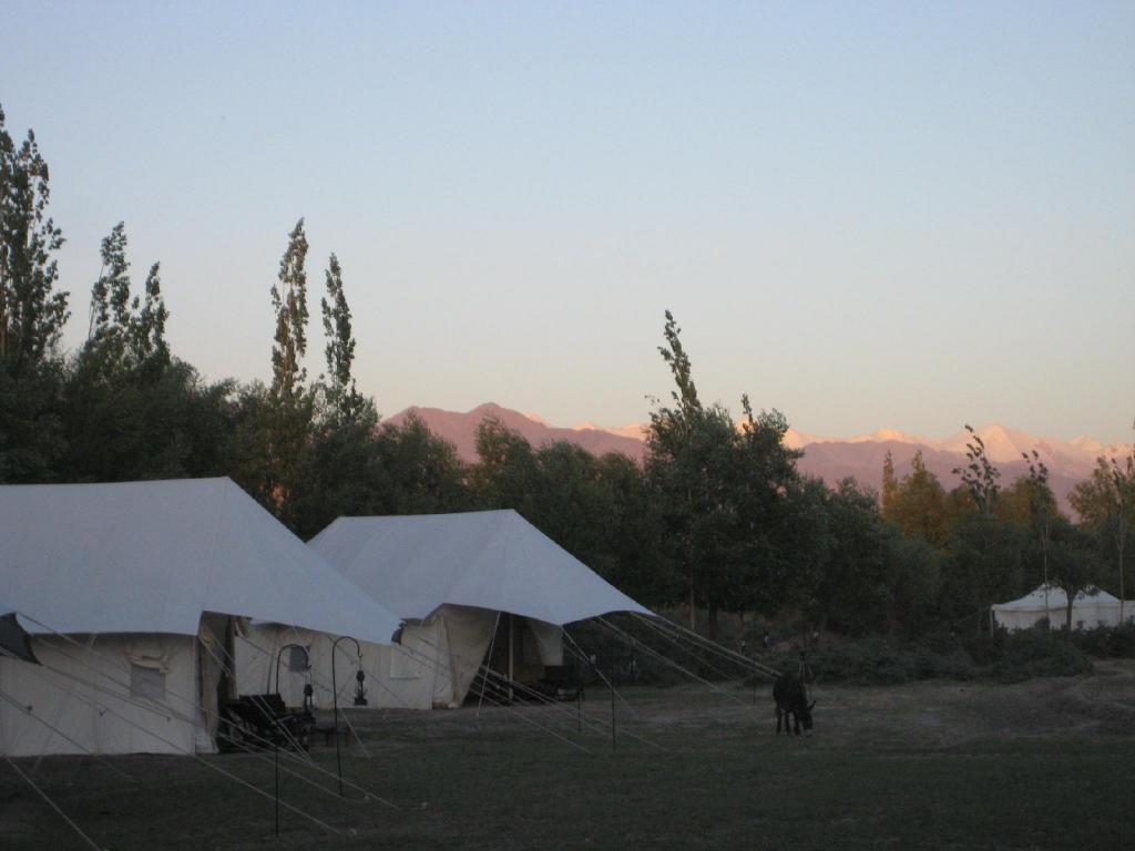 Tented Suite with Breakfast and Dinner Tsermang Eco Camp