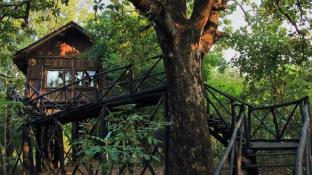 Pugdundee safaris - Tree House Hideaway