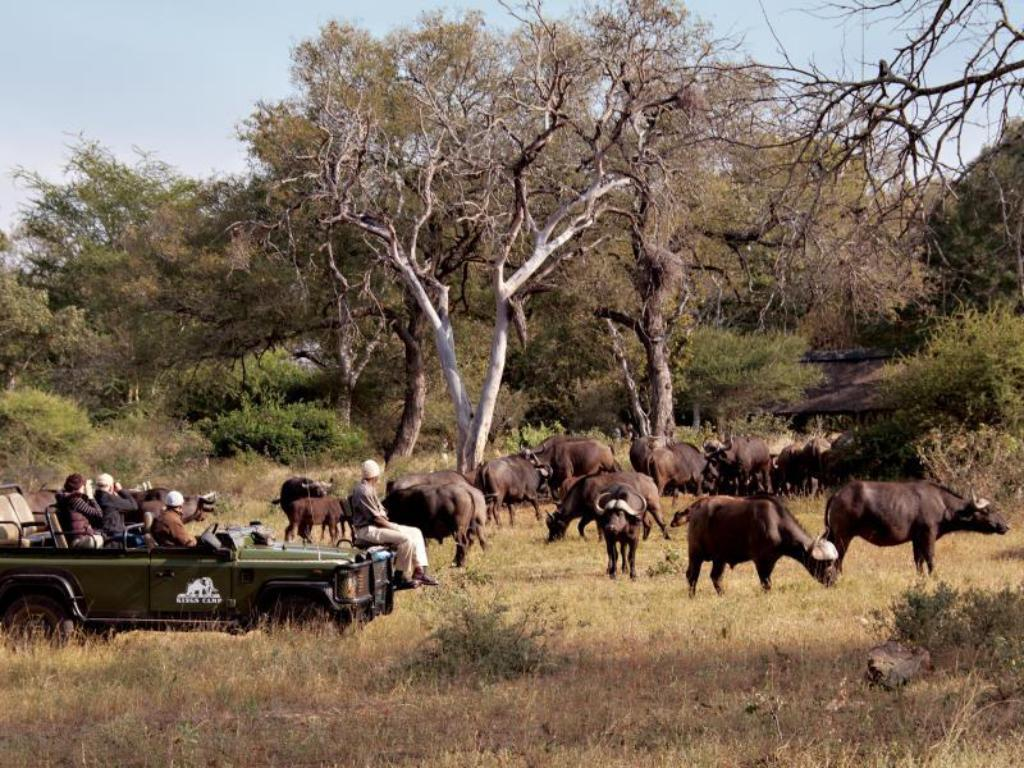 Interior view Kings Camp Private Game Reserve