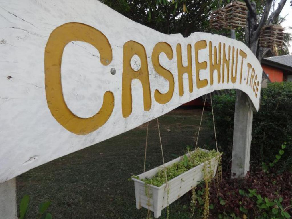 Entrance Cashewnut Tree Bungalows