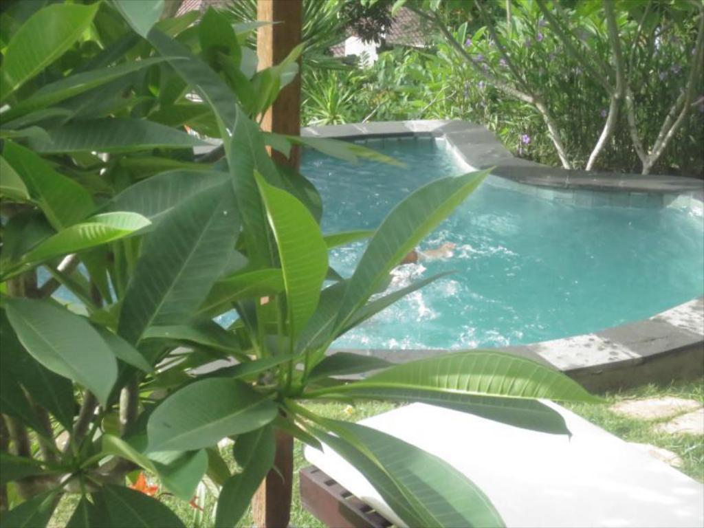 Swimming pool Jepun Didulu Cottage