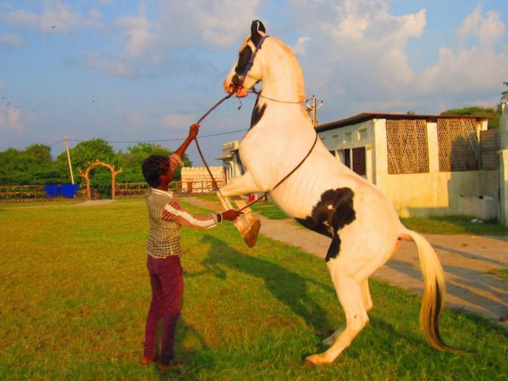 Sport a aktivity Palace Anjali -The Ranch at Charbhuja