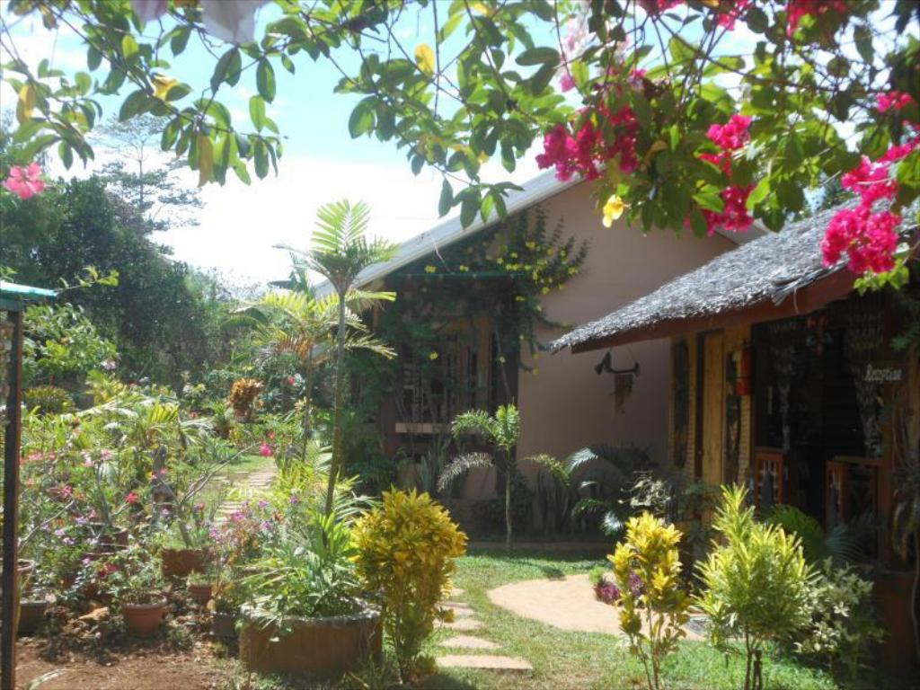 Pemandangan dalam Jungle Flower Guest House