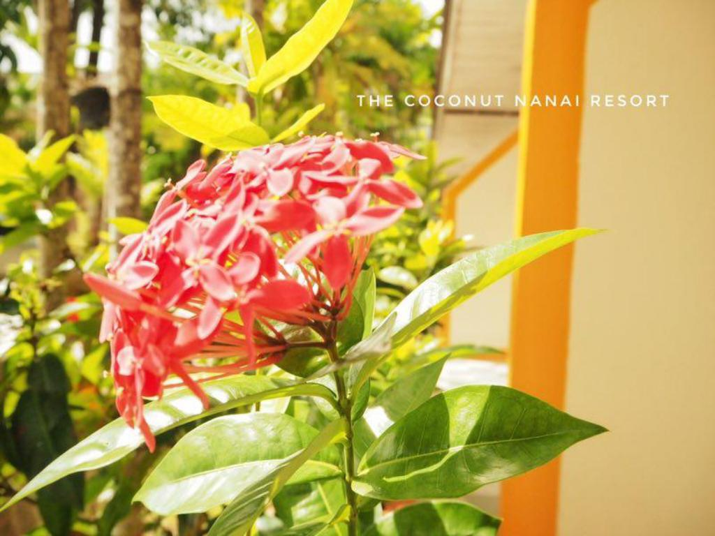 See all 30 photos The Coconut Nanai Resort