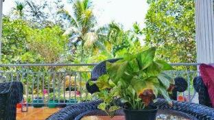 Ella's Villa Siem Reap (Pet-friendly)