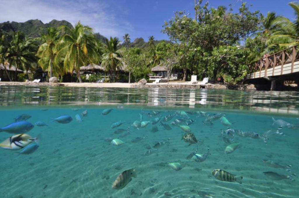 ビーチ InterContinental Moorea Resort & Spa
