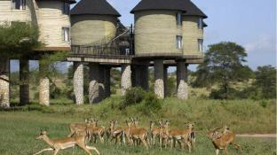 Salt Lick Safari Lodge