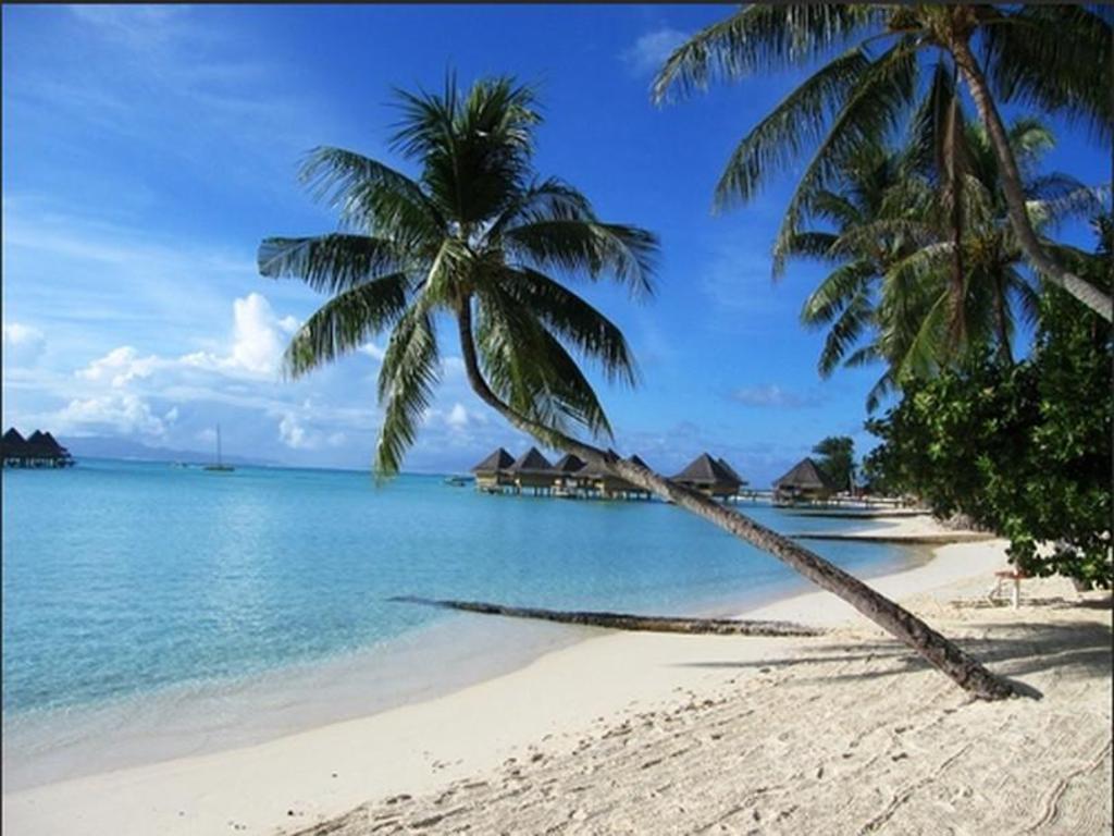 Sunset Hill Lodge Apartment (Bora Bora Island) - Deals