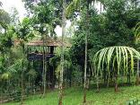 The Woods Resorts Wayanad