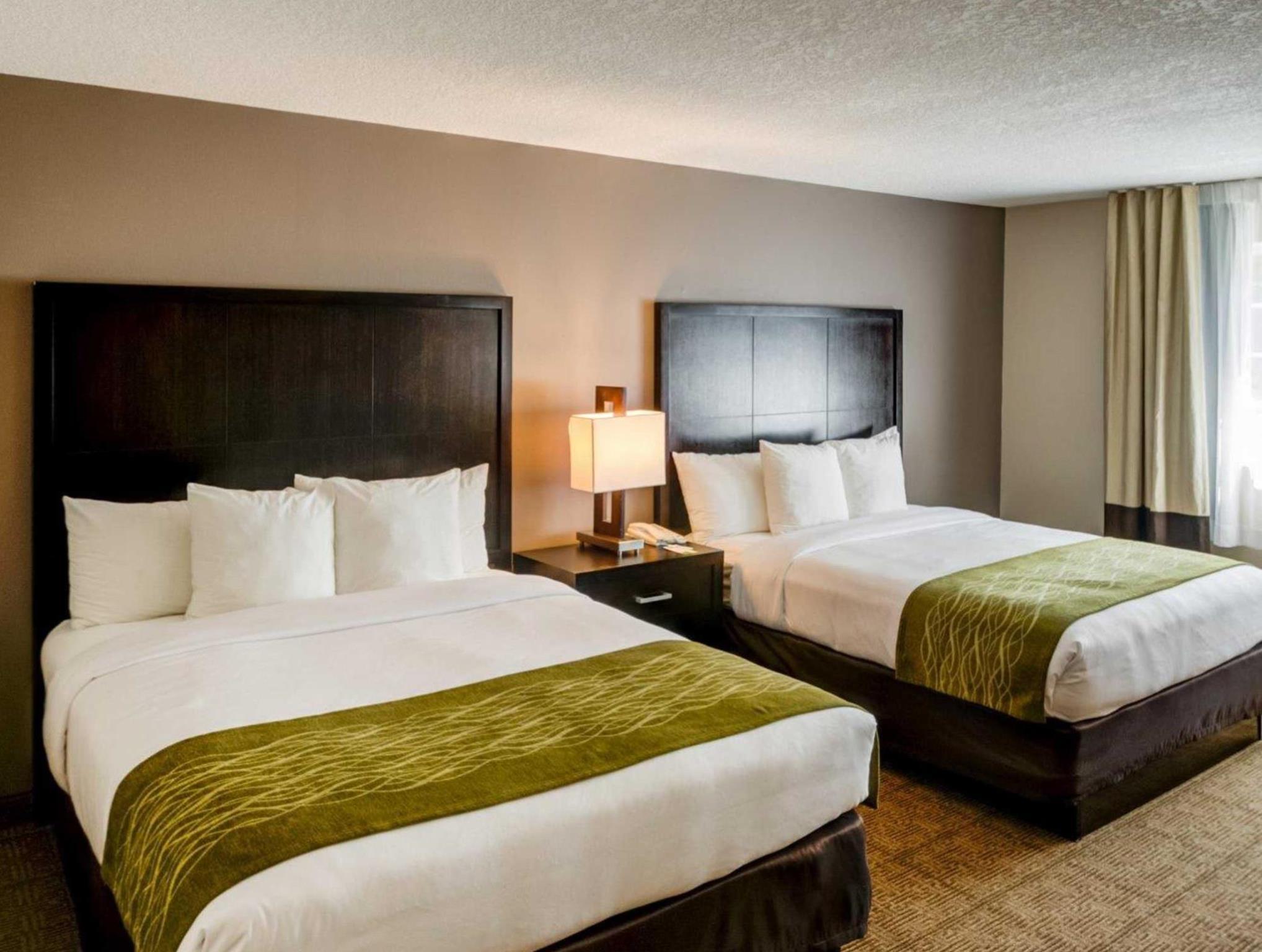 comfort inn and suites san diego zoo seaworld area san. Black Bedroom Furniture Sets. Home Design Ideas