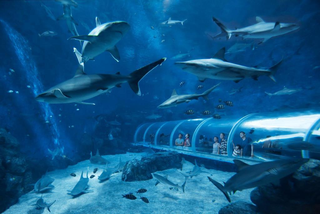 S E A Aquarium At Sentosa Tickets